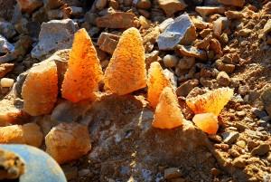 6 Pine Cones Sunlit