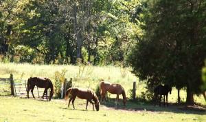 34 Mr Flynns Horses