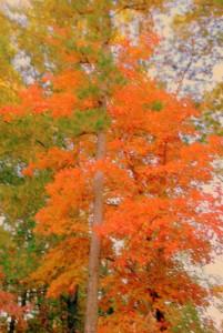22 Spotty Gorgeous Foliage