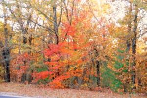 23 Gorgeous Foliage