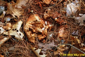 13 Bladed Barite in Woods