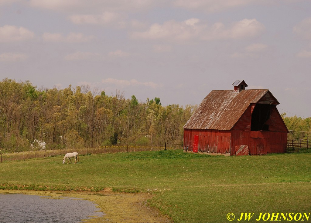 03 Beautiful Horse and Barn