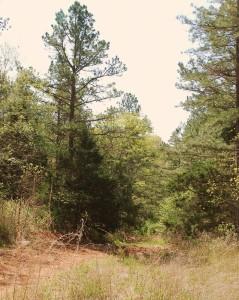 07 Road to Tiff Mines