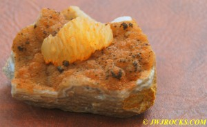 23 Chip and Druse Plate