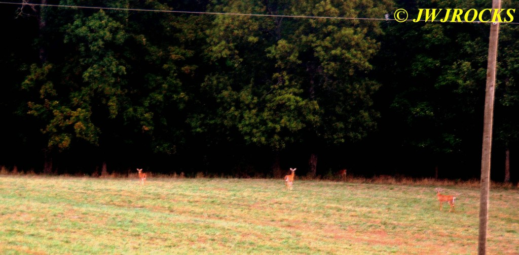 02 Deer in Field by Huzzah