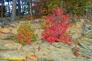 15 Fall Shrubs In Shale