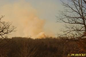 73 Woods Fire Viburnum