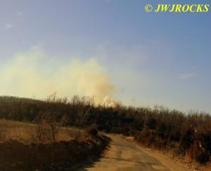 74 Woods Fire Viburnum