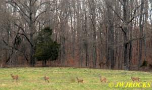 20 Deer in Field Leaving Mine