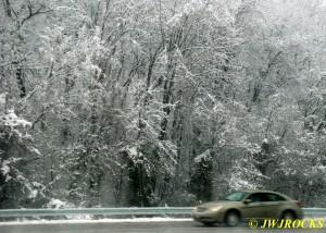 33A Heavy Snow on Trees