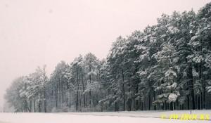 35 Pine Grove Near AH