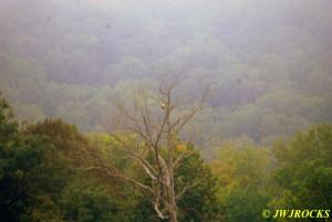 11 Carol Spotted Eagle
