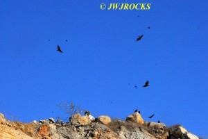 121 Vultures Flying Overhead