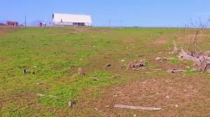 Kaleidoscope Farm Pasture - Trav Pix