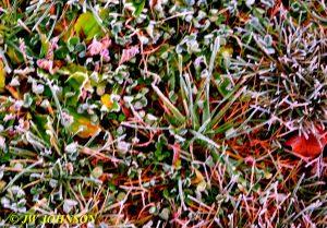 59-frosty-grass